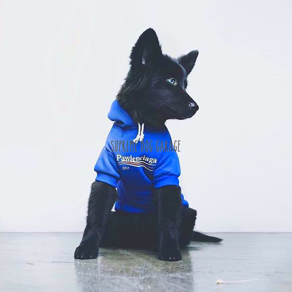 hype dog hoodie