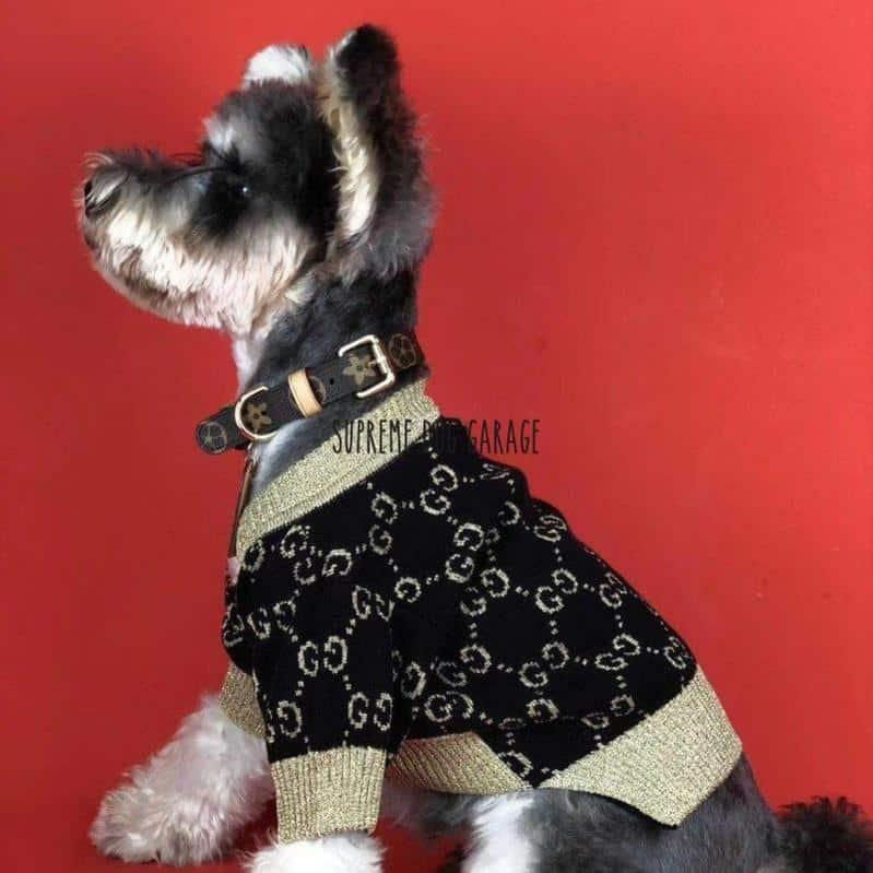 gucci dog clothing