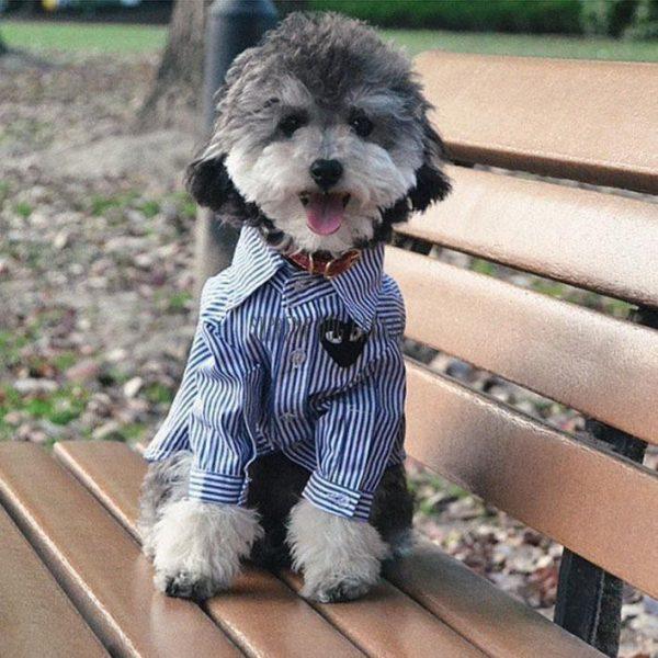 Black Love Designer Dog Shirt