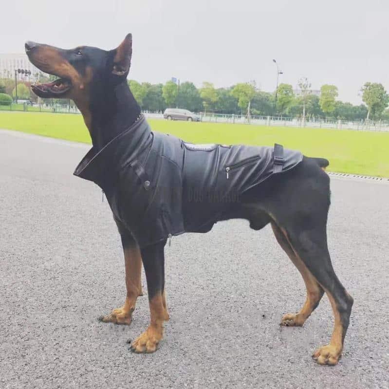 'BORN WILD' Biker Dog Jacket
