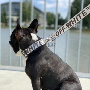 Woof White Dog Collar (8 colors)