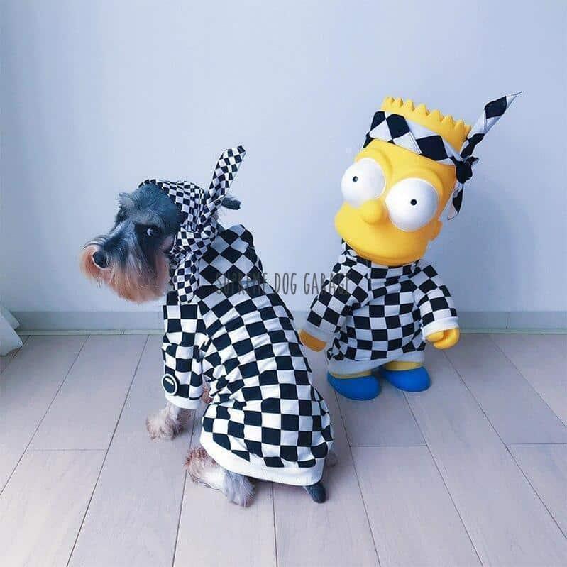 checkerboard dog clothes
