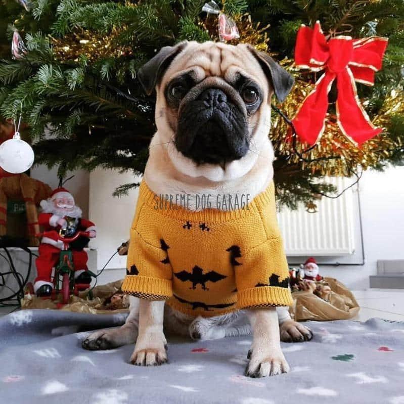 funny dog sweater