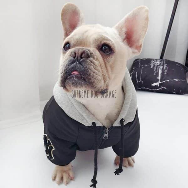 NY Hype Dog Hooded Jacket