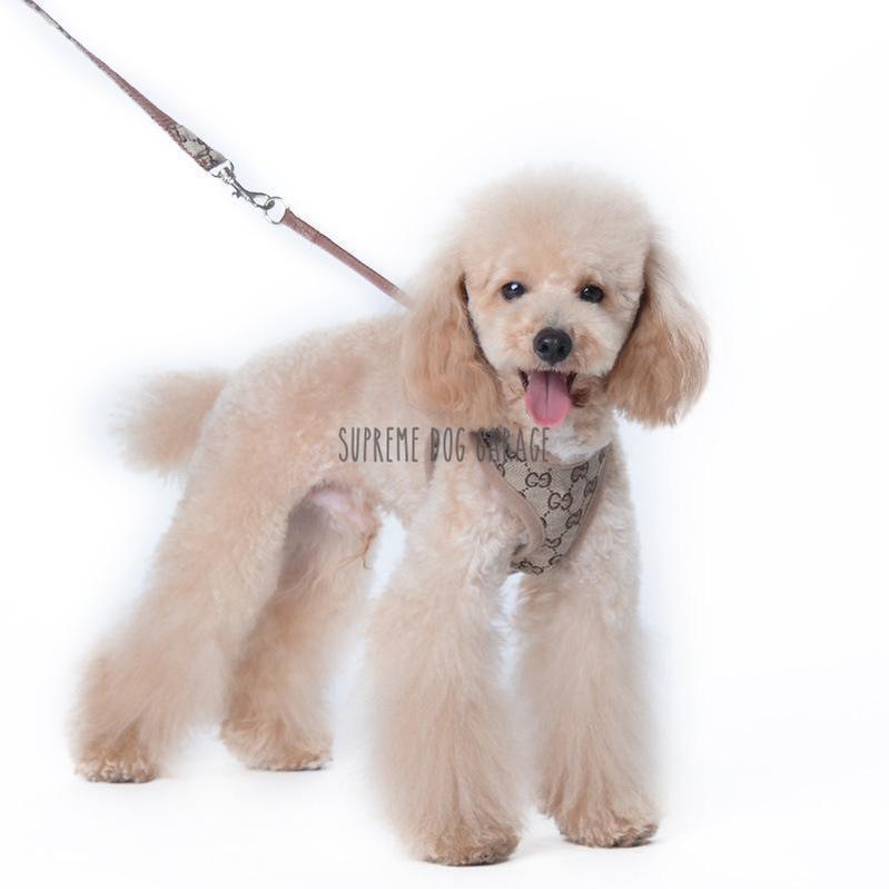 Pawcci Designer Dog Harness With Leash Set