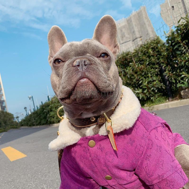 Pawtton Winter Fluff Jean Dog Coat