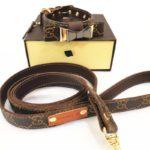 designer bow tie dog collar and leash gucci