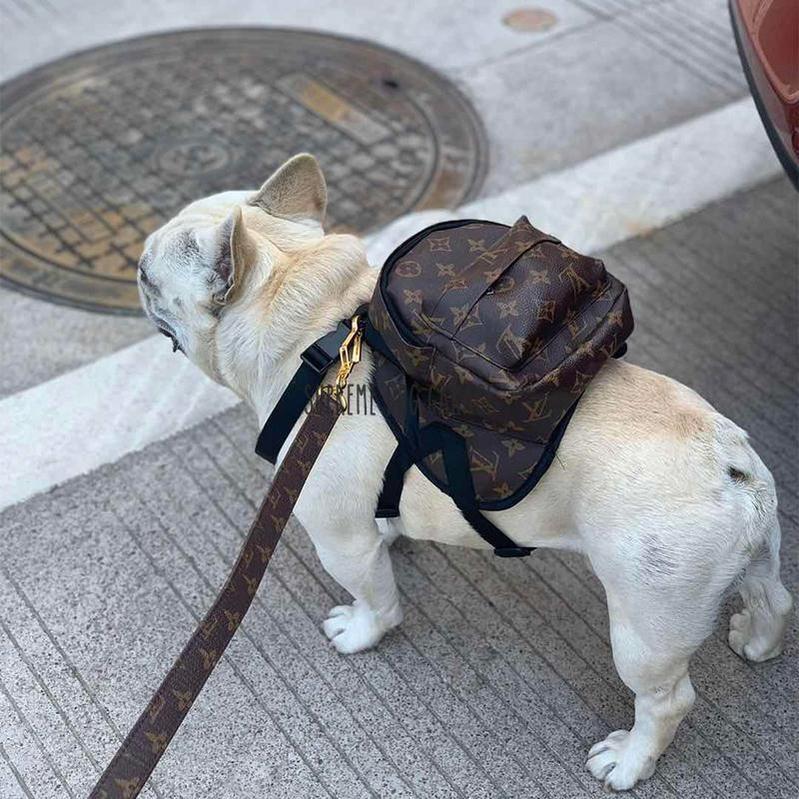 designer dog backpack harness and leash
