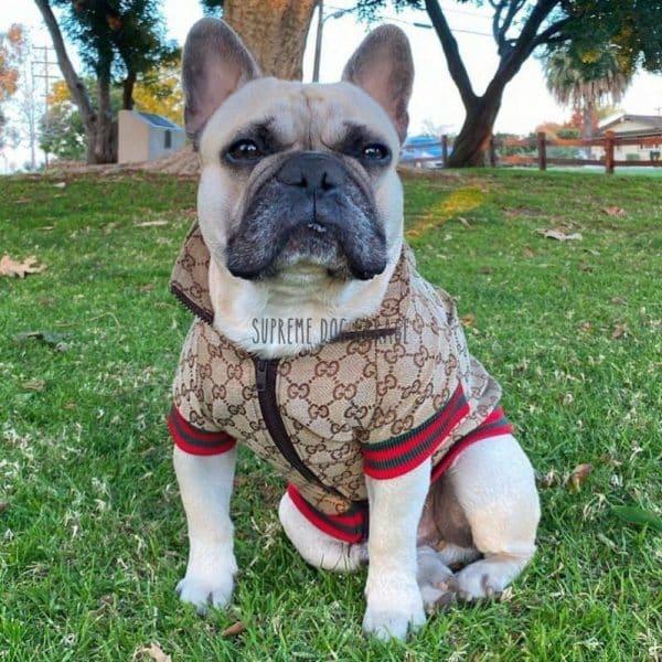 Dolce Hype Dog Hooded Jacket