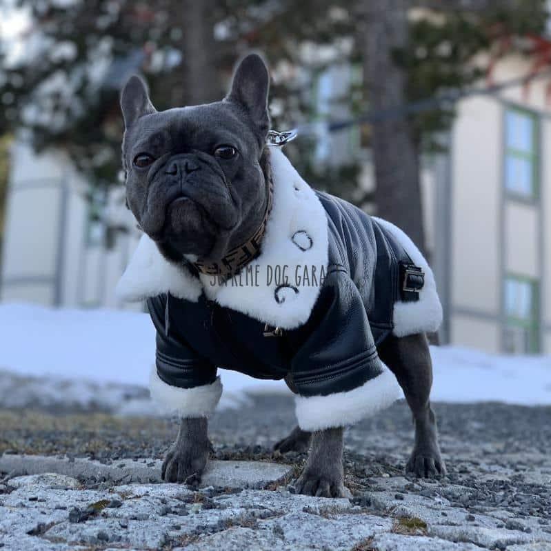Sara Dog Leather Winter Coat