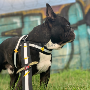 Pawcci Bee Hype Dog Harness & Leash Set