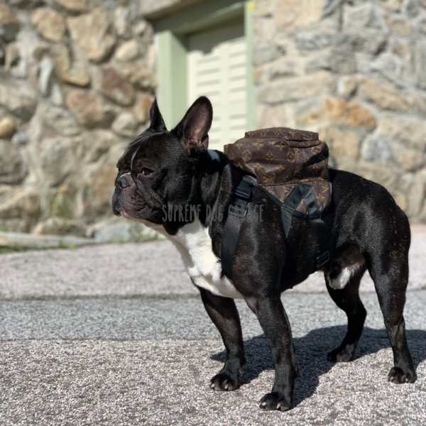 Chewy Designer Dog Backpack Harness