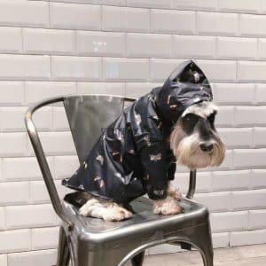 fendi dog clothes