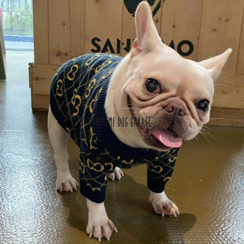 Pawcci Elite Gold Designer Dog Sweater