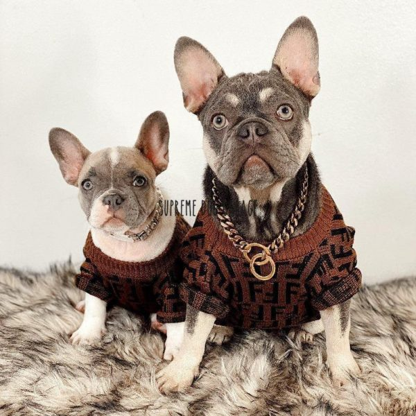 designer sweaters for dogs