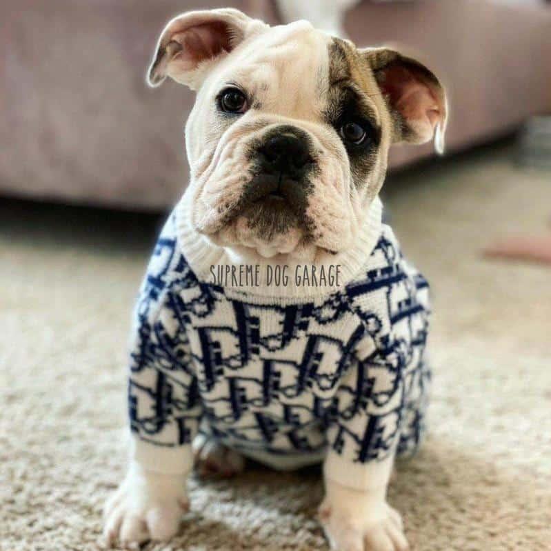 monogram dog sweater