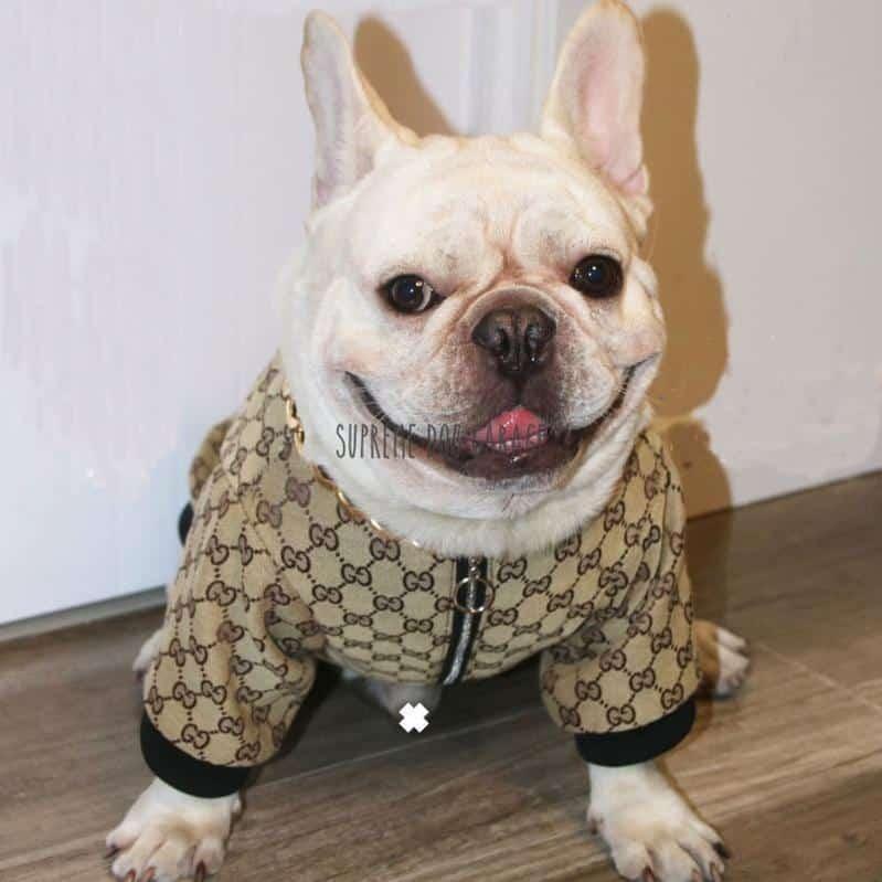 Gigi Monogram Designer Dog Bomber Jacket