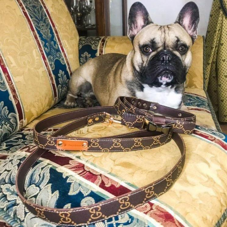gucci dog collar and leash