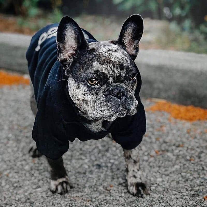 adidog black hoodie