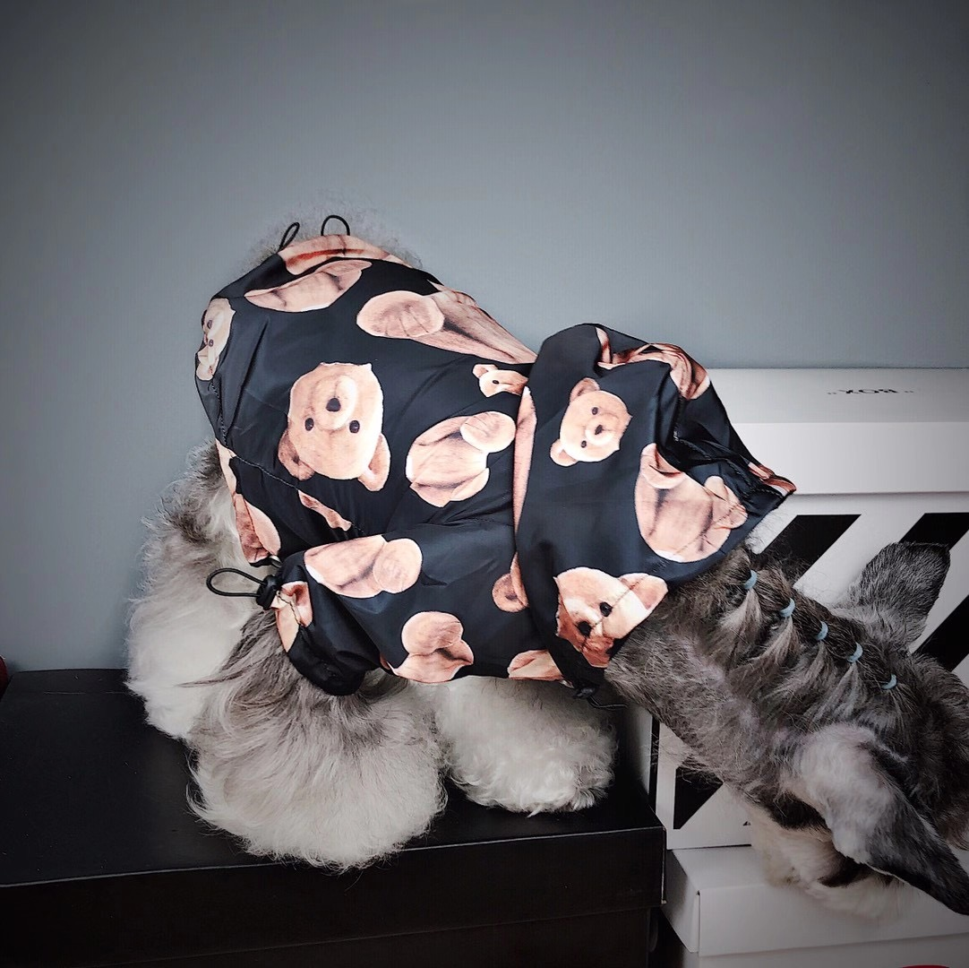 moschino dog clothes