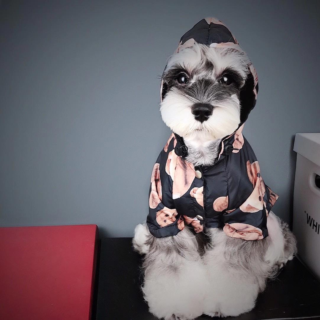 palm angels dog hoodie