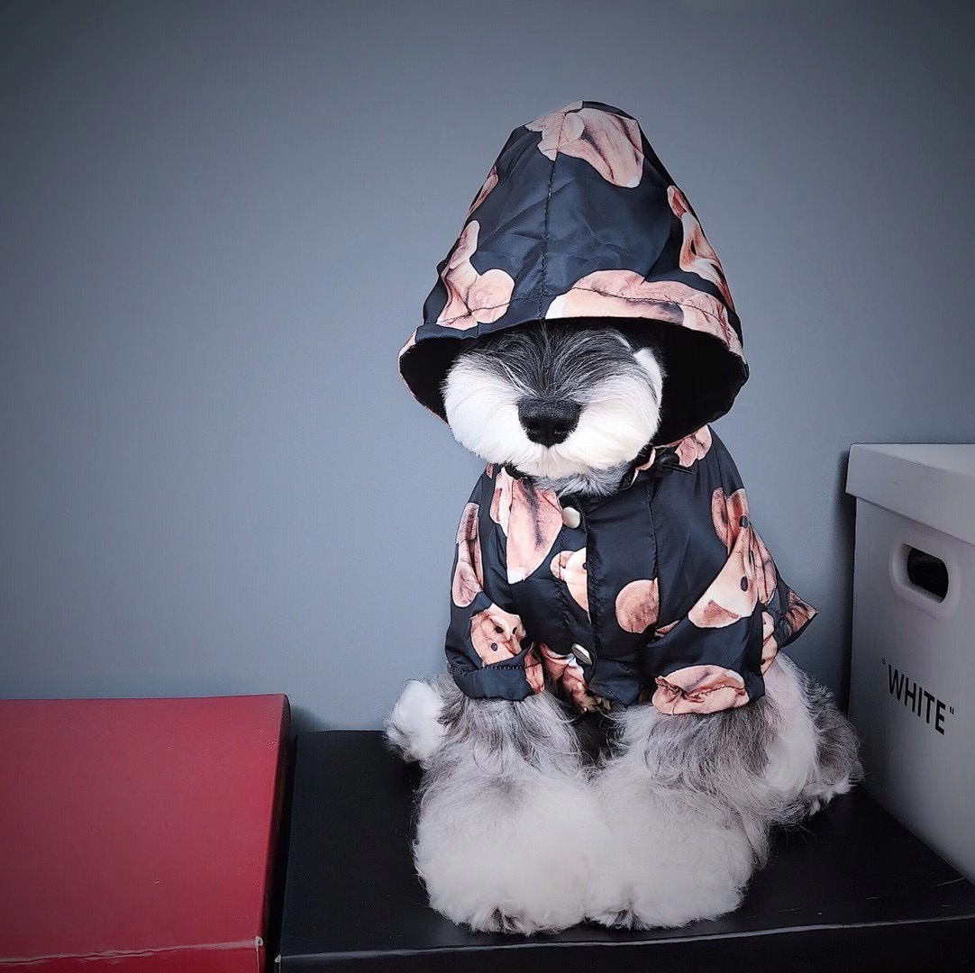 palm angels dog clothes