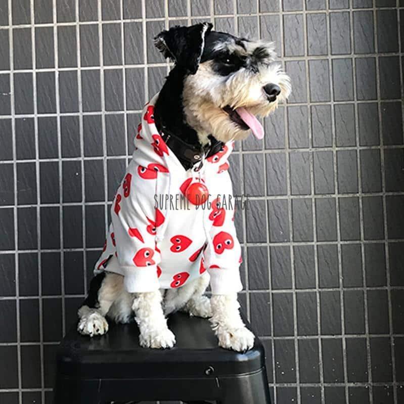 red hearts dog hoodie