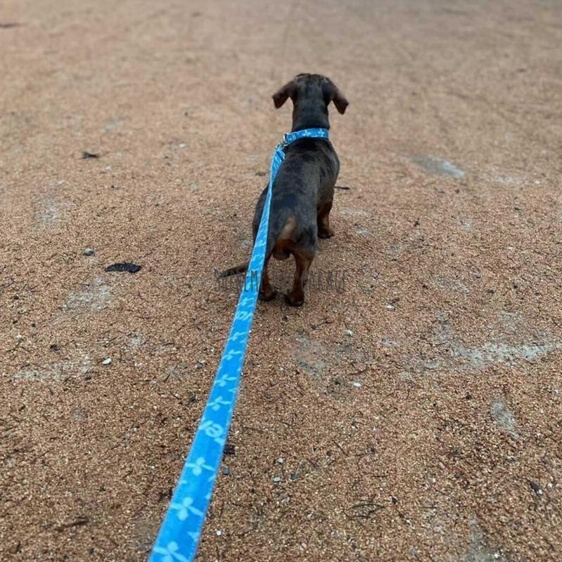 Prime Pup Denim Dog Collar & Leash Set