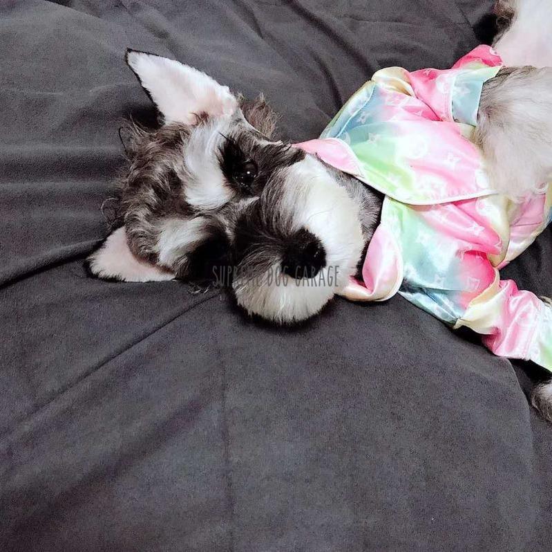 Chewy Dog Pajama Shirt