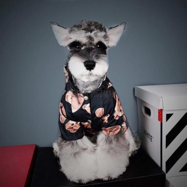 Broken Teddy Hype Dog Hooded Raincoat