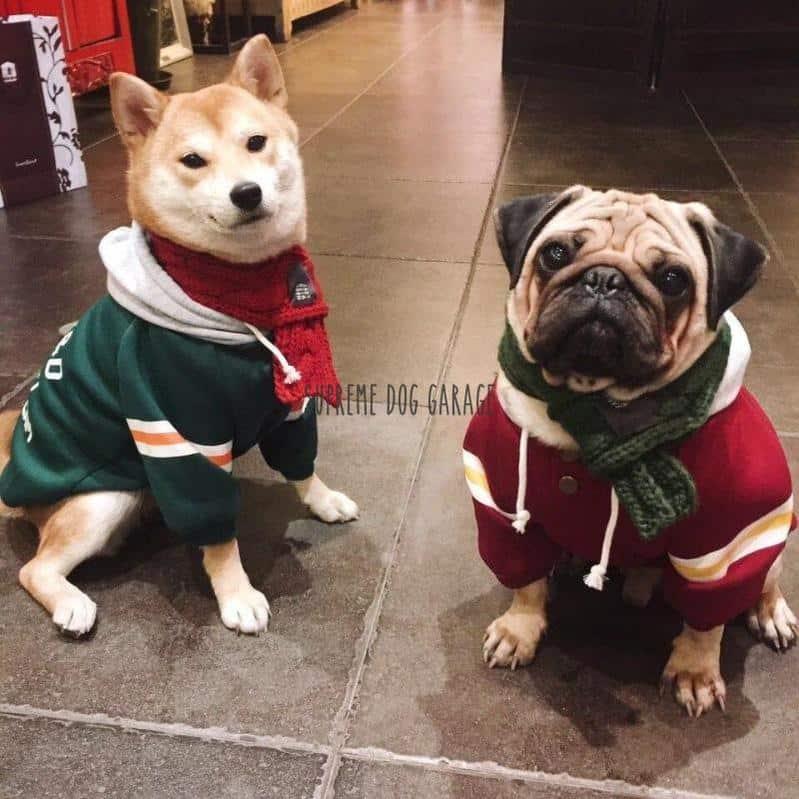 fashion dog clothes
