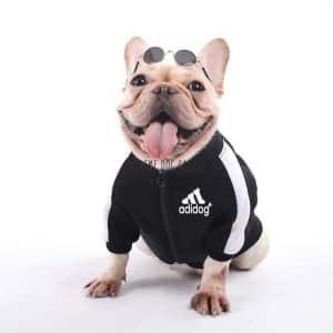 jacket for french bulldog