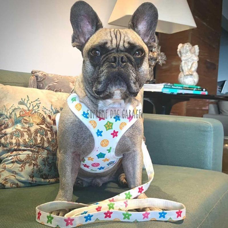 Louie White Designer Dog Walking Set (Harness + Leash)