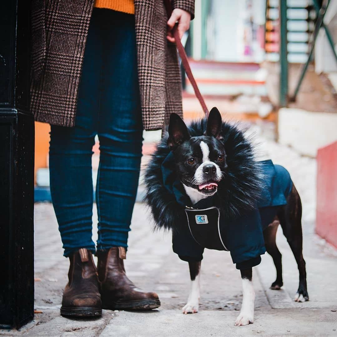 dog wear clothes