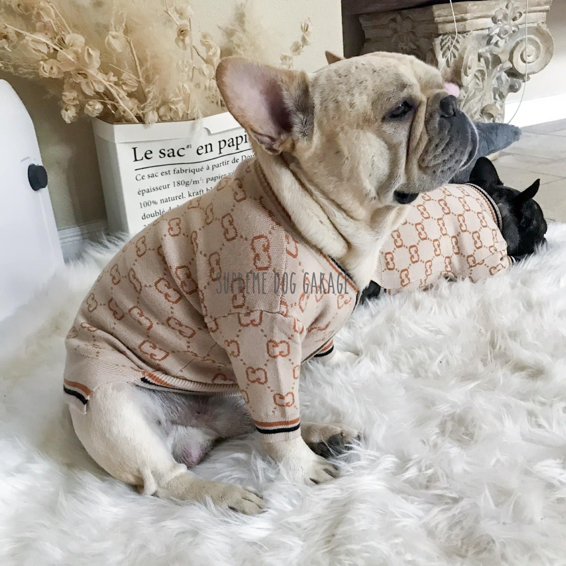 gucci dog sweaters