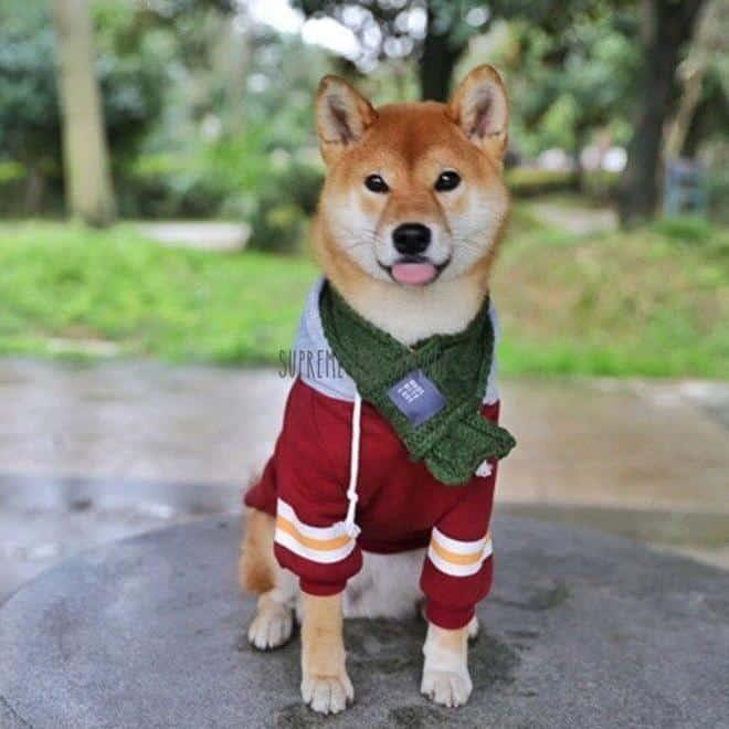 cool dog hoodie