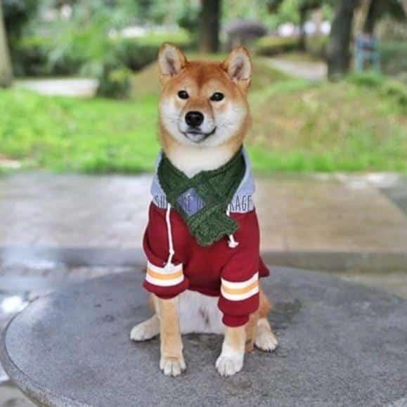 american apparel dog hoodie