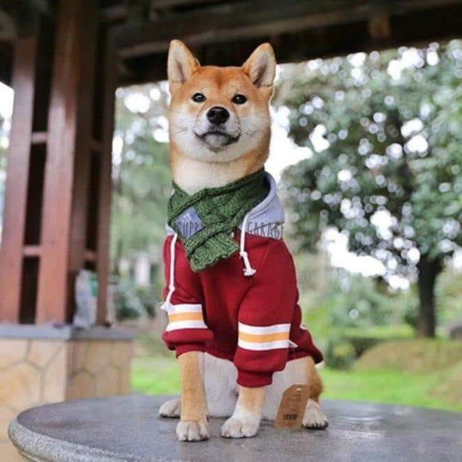 best dog hoodie