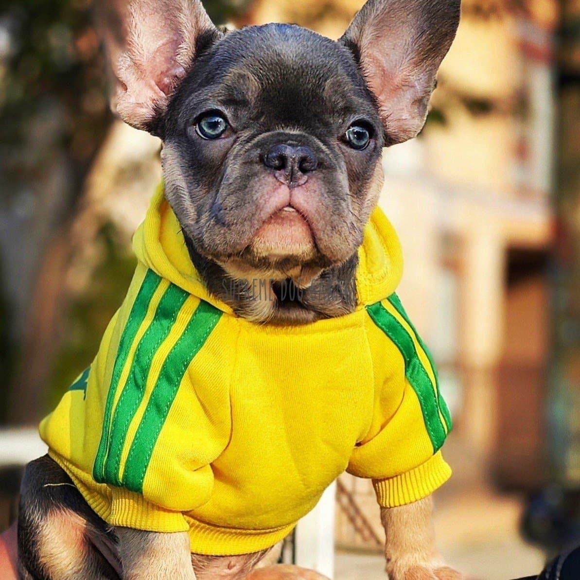 adidog yellow hoodie