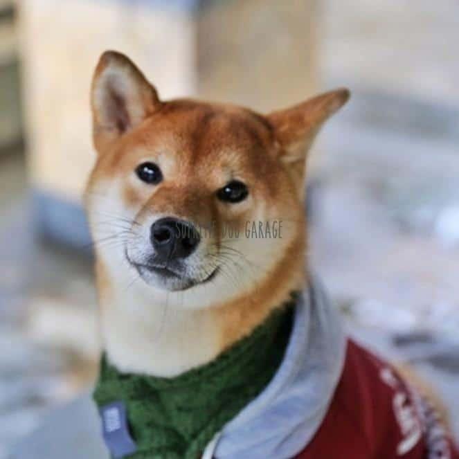 fashion dog clothing