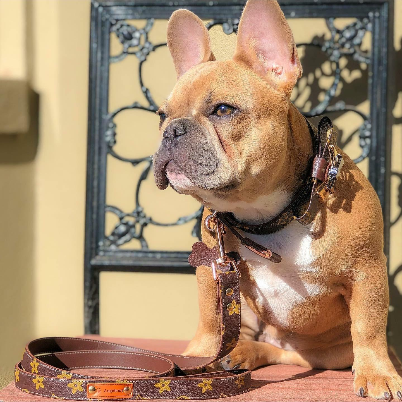 lv dog collar and leash