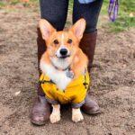lightweight waterproof dog coat