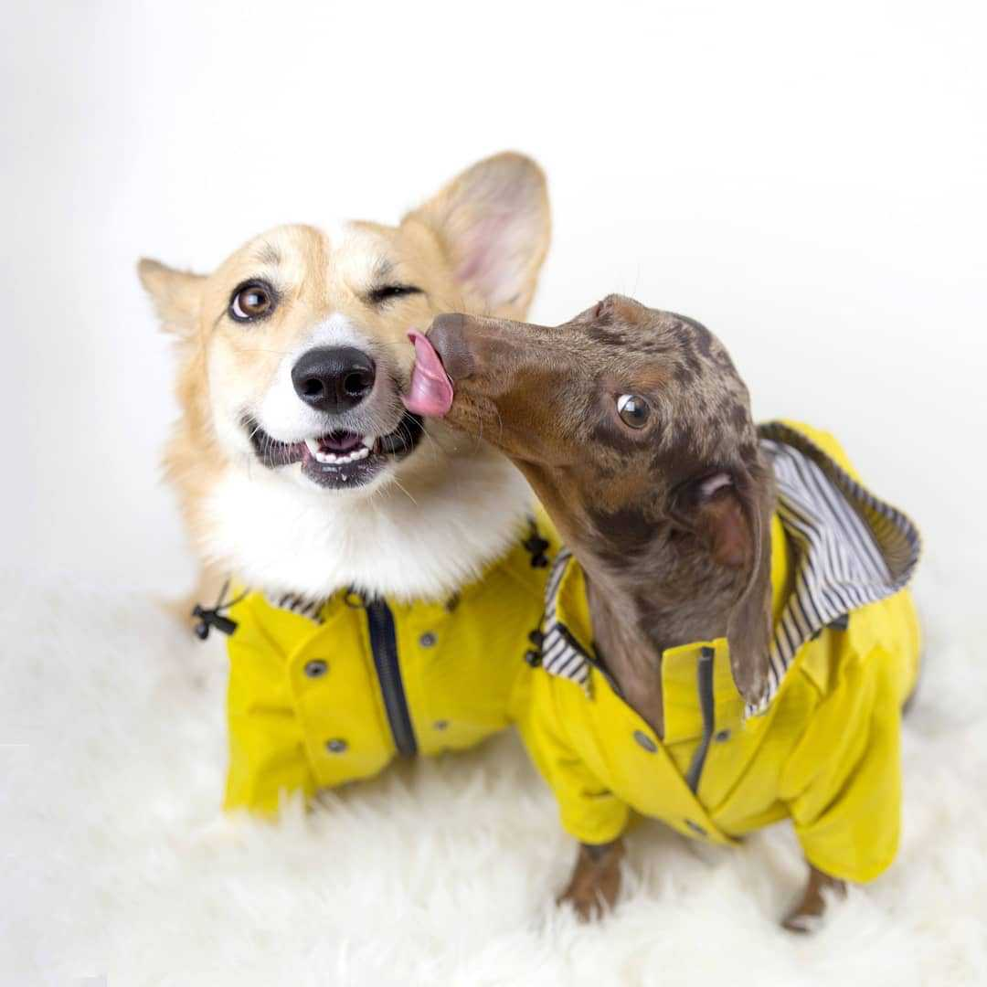 dog windbreaker jacket