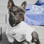 nike clothes for dogs