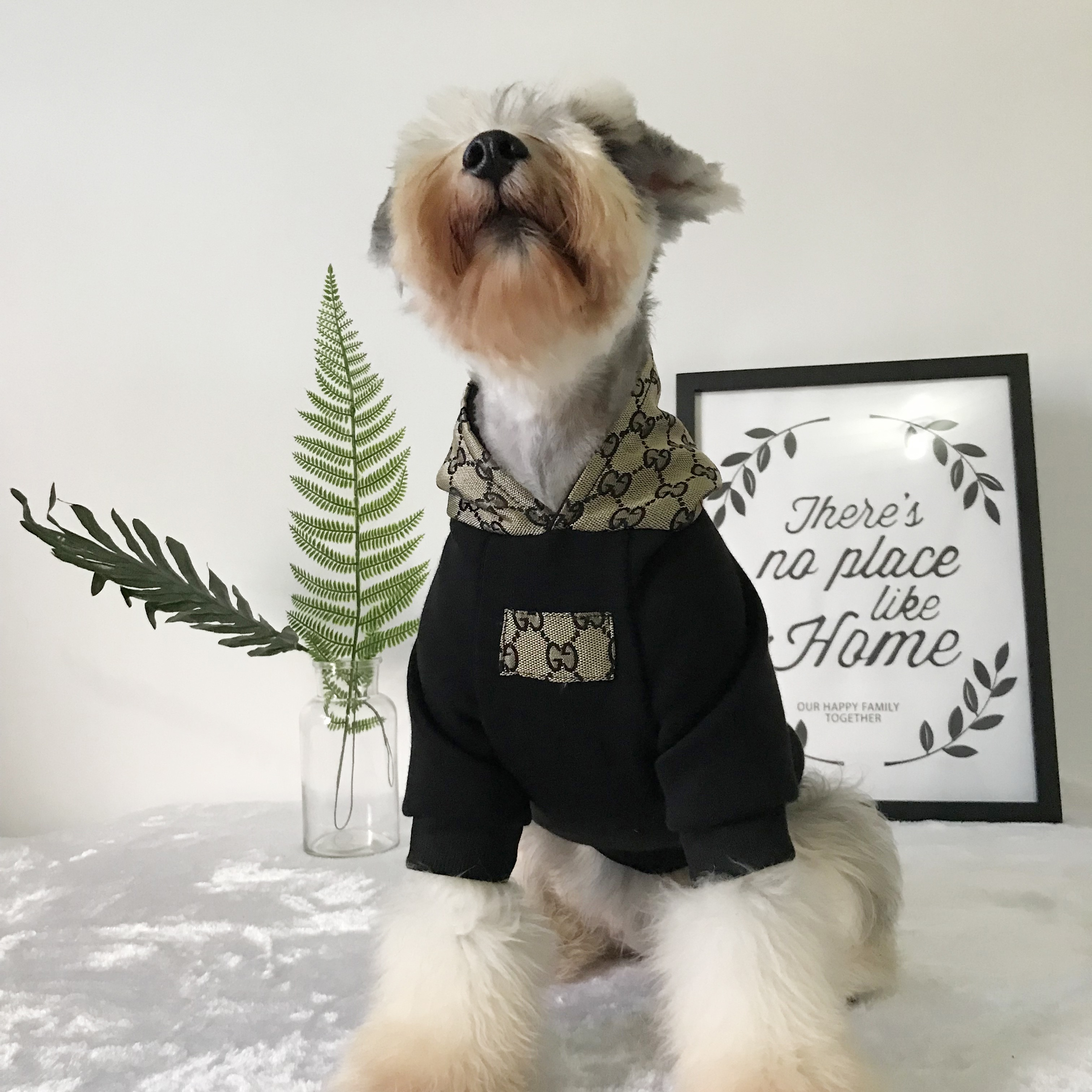gucci dog hoodie