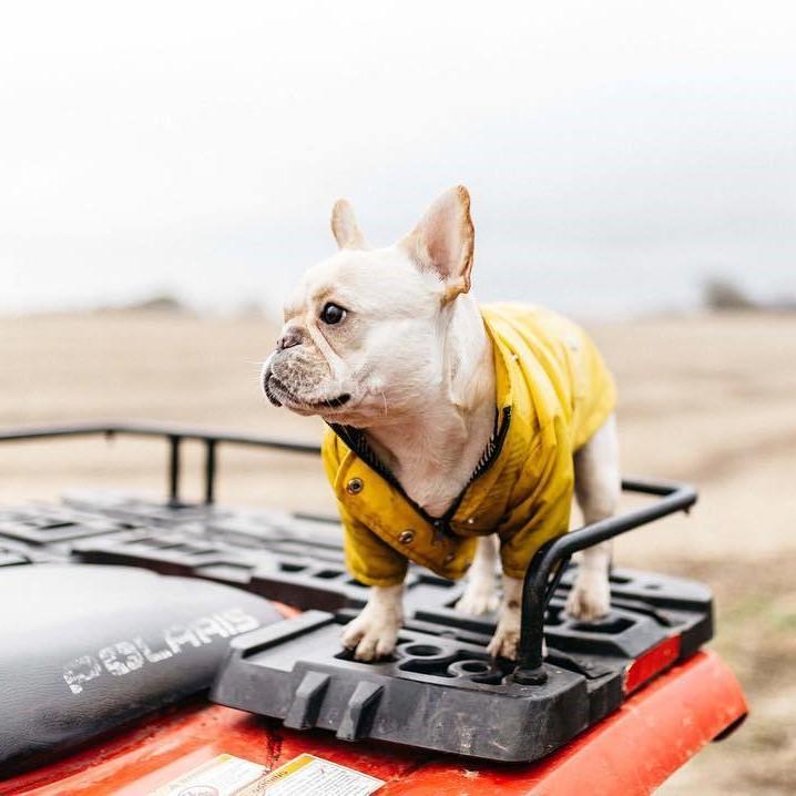 waterproof dog jacket uk