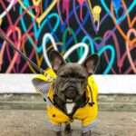 waterproof dog jacket australia