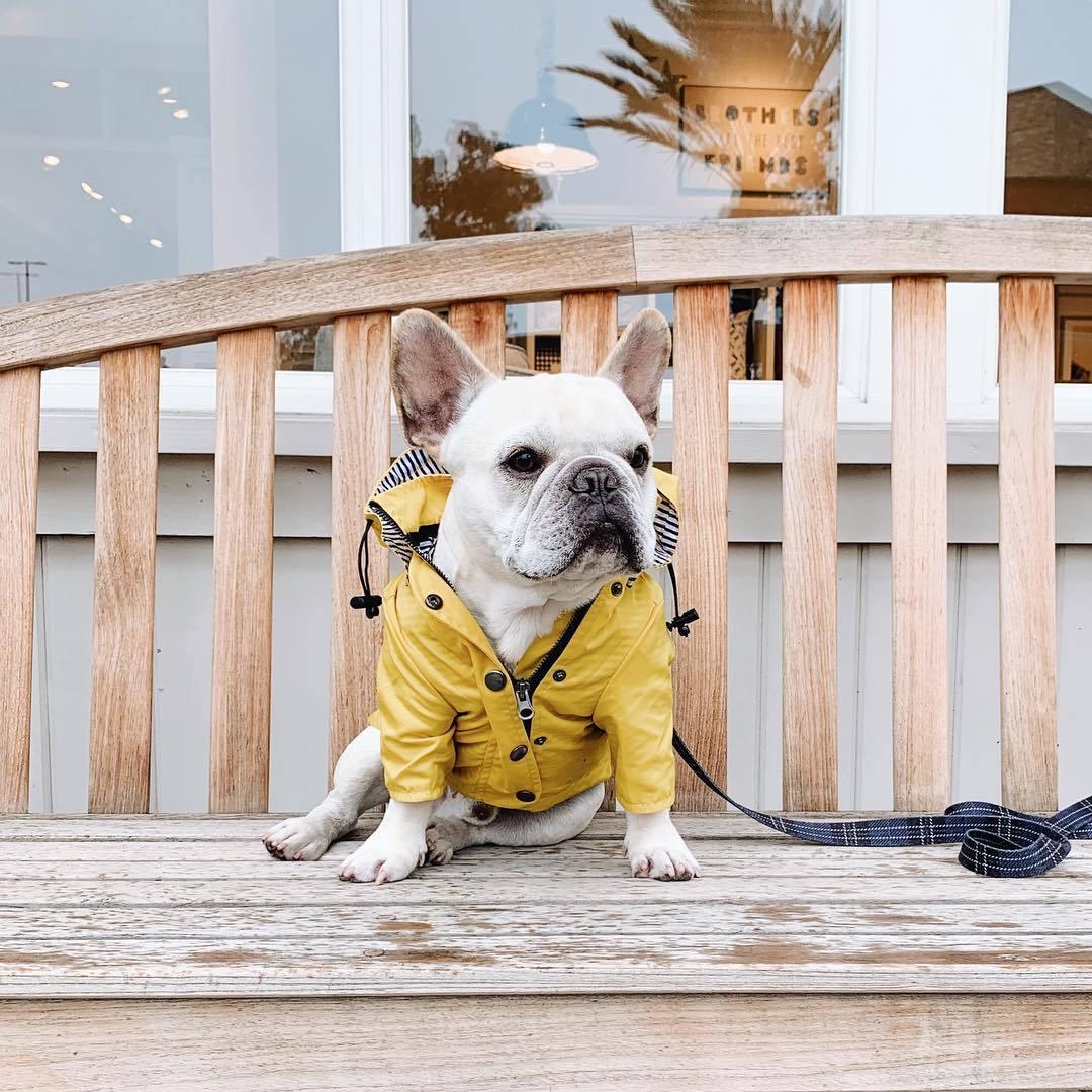 dog windbreaker