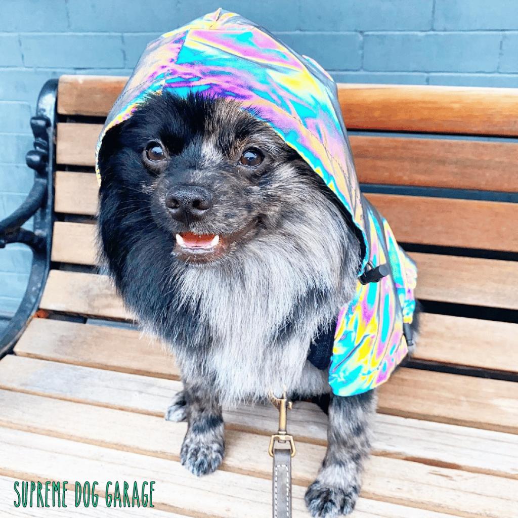 chihuahua dog jacket