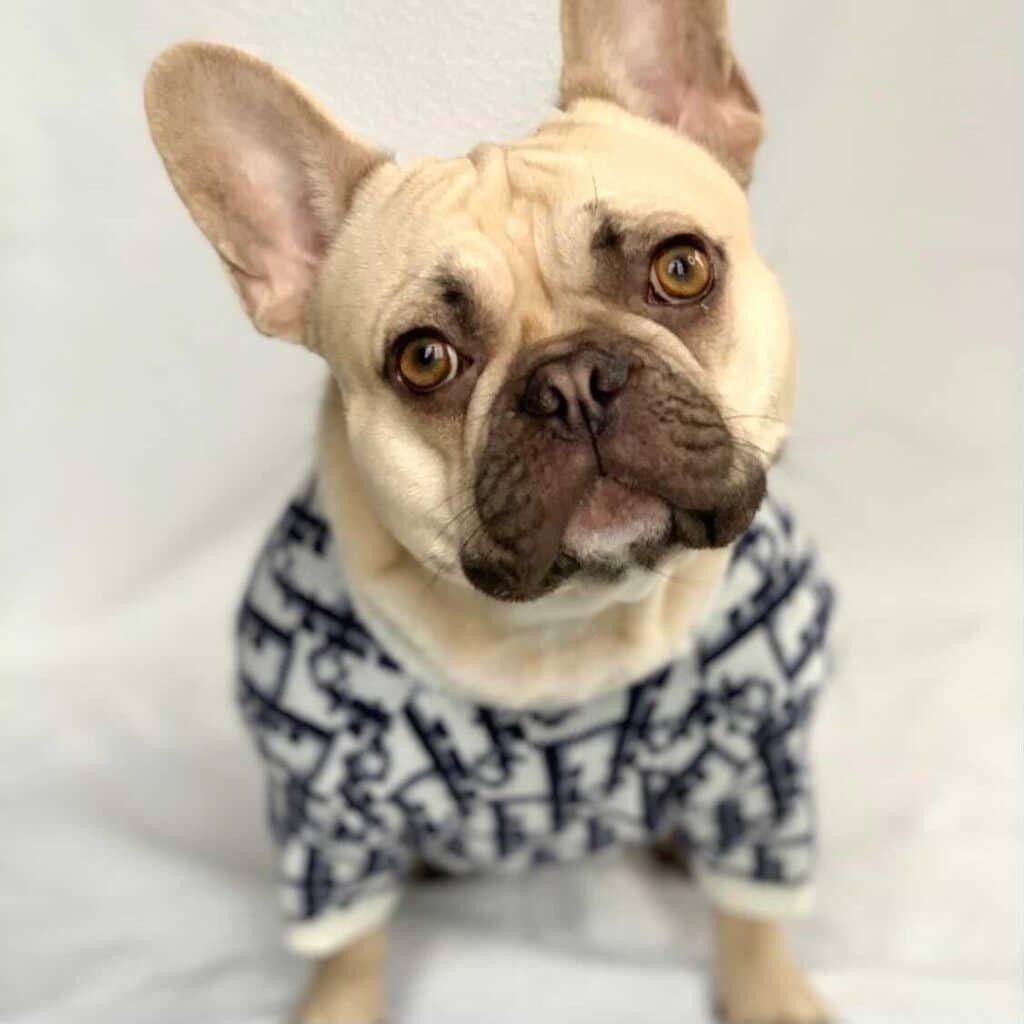 designer dog sweater